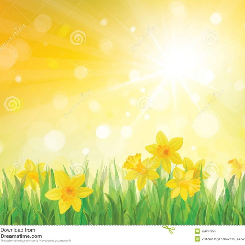 10 Best Free Spring Background Images FULL HD 1080p For PC Desktop 2018 free download vector of daffodil flowers on spring background stock vector 800x800