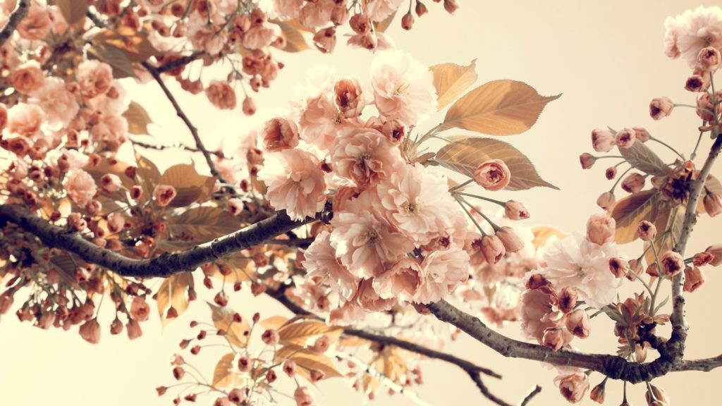 10 Latest Vintage Spring Desktop Background FULL HD 1080p For PC Desktop 2020 free download vintage flowers background hd wallpaper of vintage 1024x576