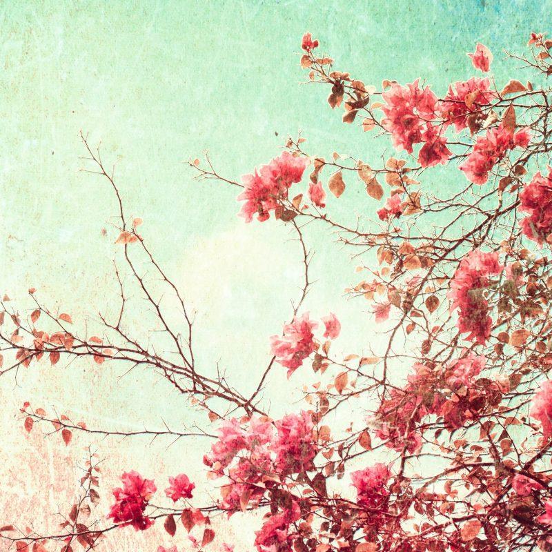 10 Best Desktop Wallpaper Flowers Vintage FULL HD 1080p For PC Desktop 2018 free download vintage flowers images hd wallpapers beautiful images hd pictures 800x800