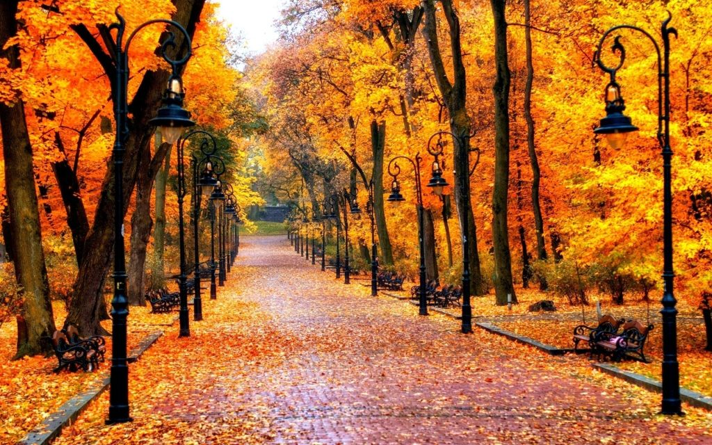 10 Best High Definition Autumn Wallpaper FULL HD 1080p For PC Background 2020 free download wallpaper autumn top beautiful autumn photos 45 high definition 1024x640