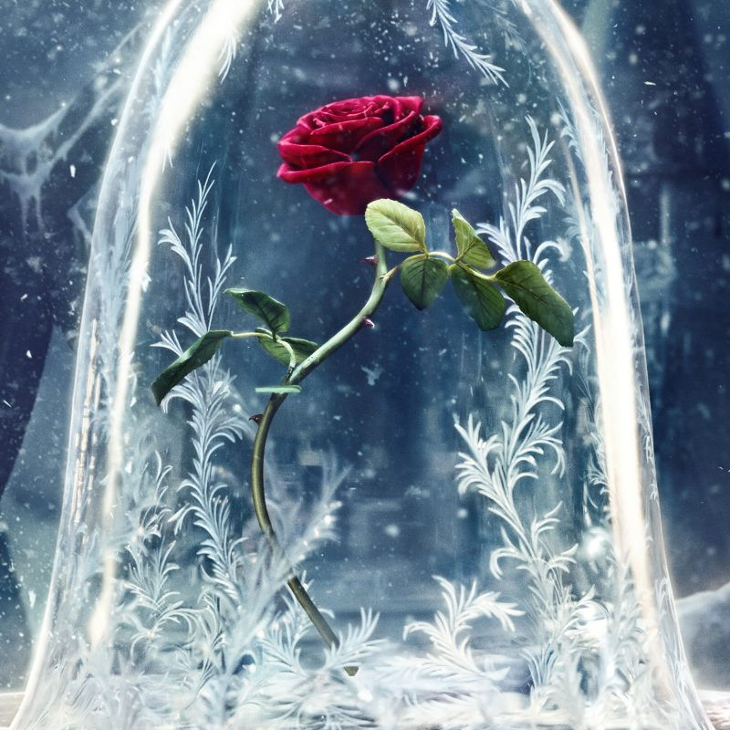 10 Most Popular Beauty And The Beast Wallpaper FULL HD 1080p For PC Background 2018 free download wallpaper beauty and the beast 2017 movies disney rose movies 1261 800x800