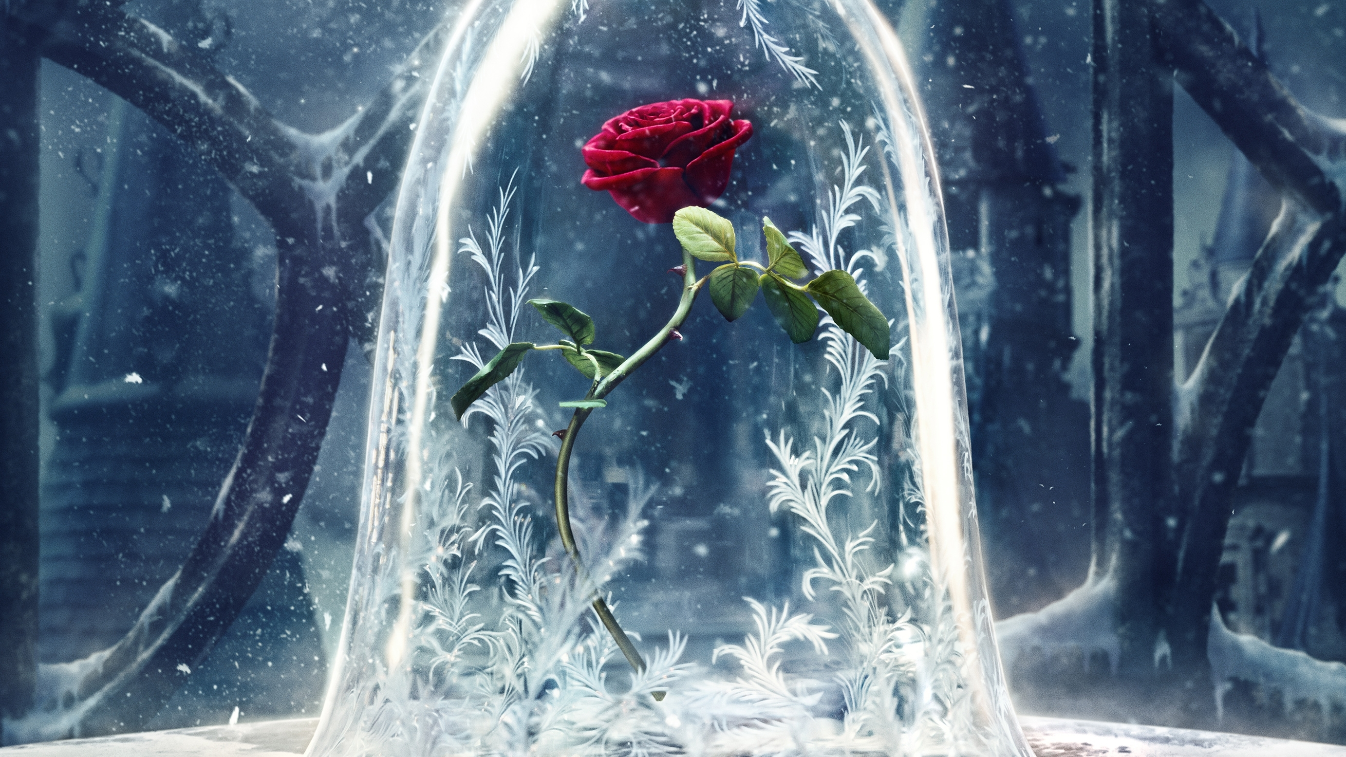 wallpaper beauty and the beast, 2017 movies, disney, rose, movies, #1261