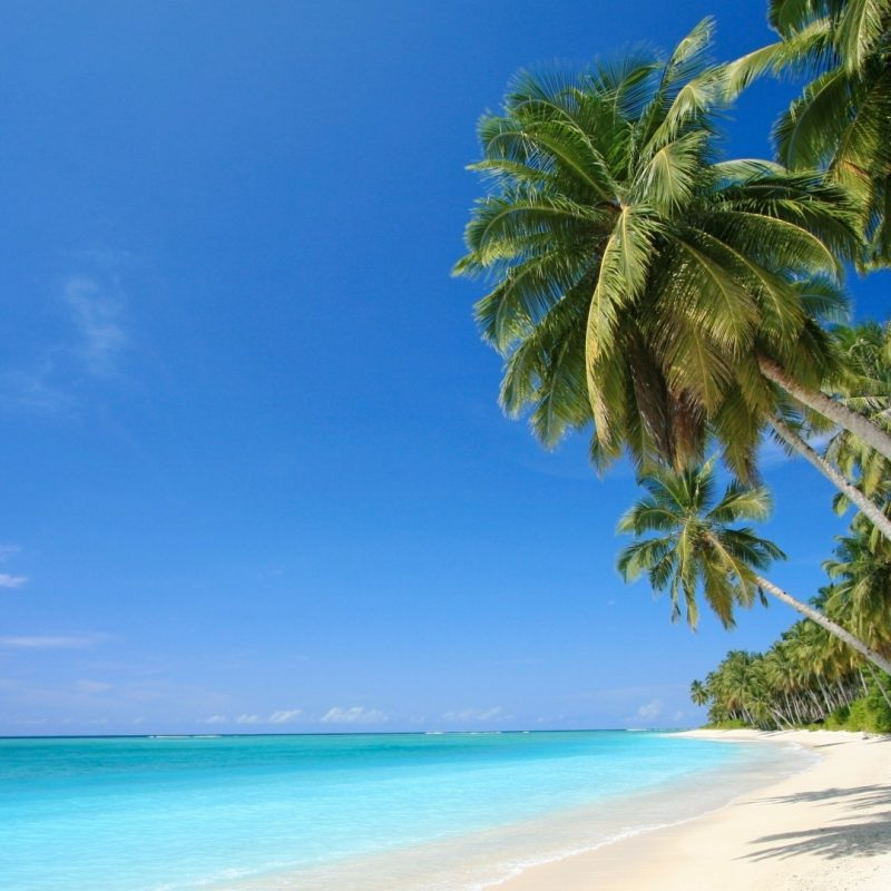 10 Top Caribbean Beaches Wallpaper Desktop FULL HD 1080p For PC Desktop 2020 free download wallpaper caribbean sea palm beach sea caribbean desktop 2 800x800