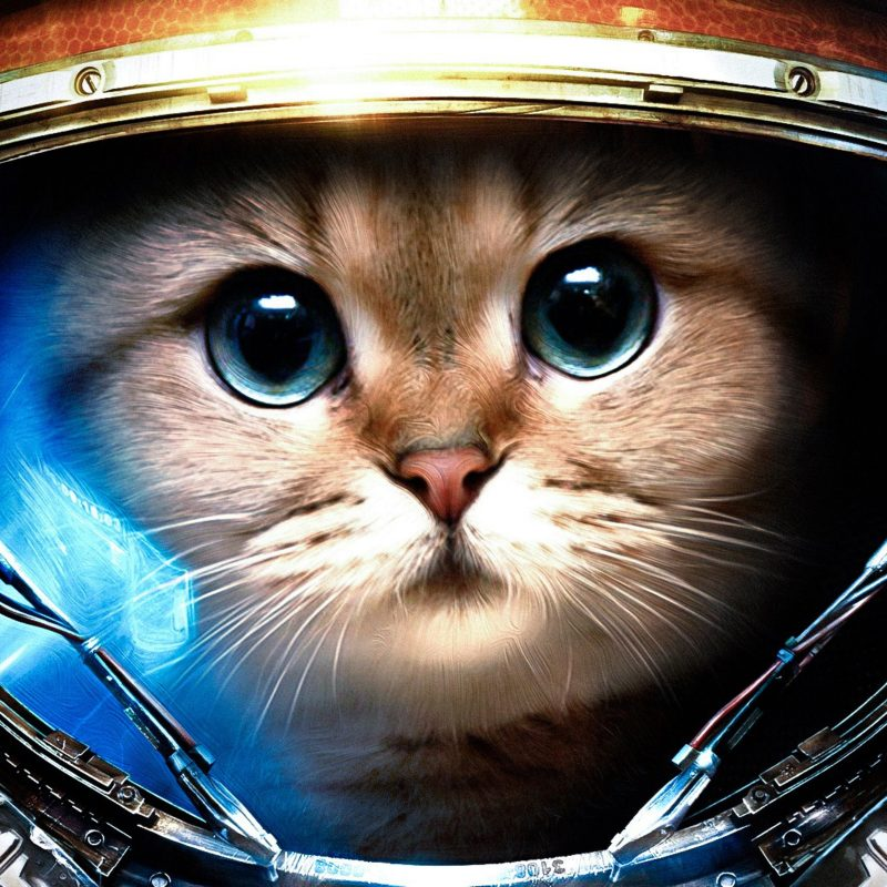 10 New Cat Backgrounds For Computer FULL HD 1080p For PC Desktop 2018 free download wallpaper download 5120x3200 cat from space animal wallpapers hd 800x800