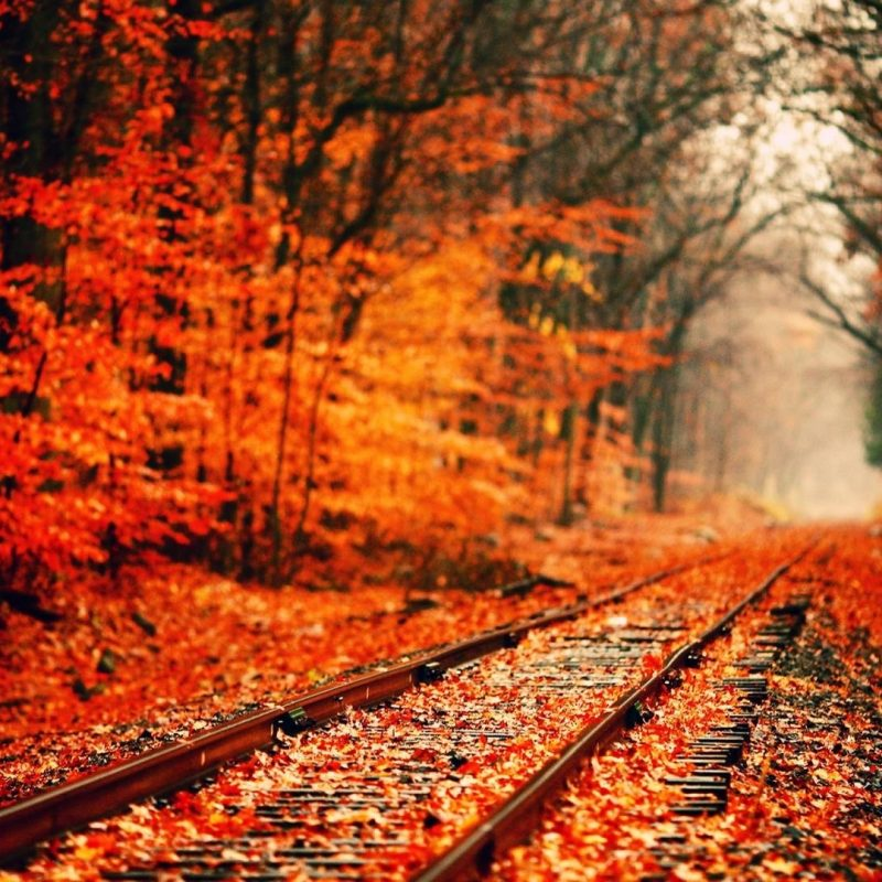 10 New Pretty Fall Backgrounds Desktops FULL HD 1080p For PC Background 2018 free download wallpaper fall nice hd wallpapers with red and orange colors 3 800x800