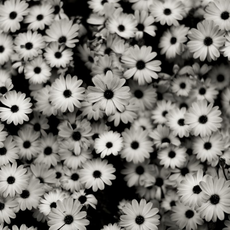 10 Latest Black And White Computer Wallpaper FULL HD 1080p For PC Desktop 2018 free download wallpaper flowers pattern grey daisies daisy tree flower 1 800x800