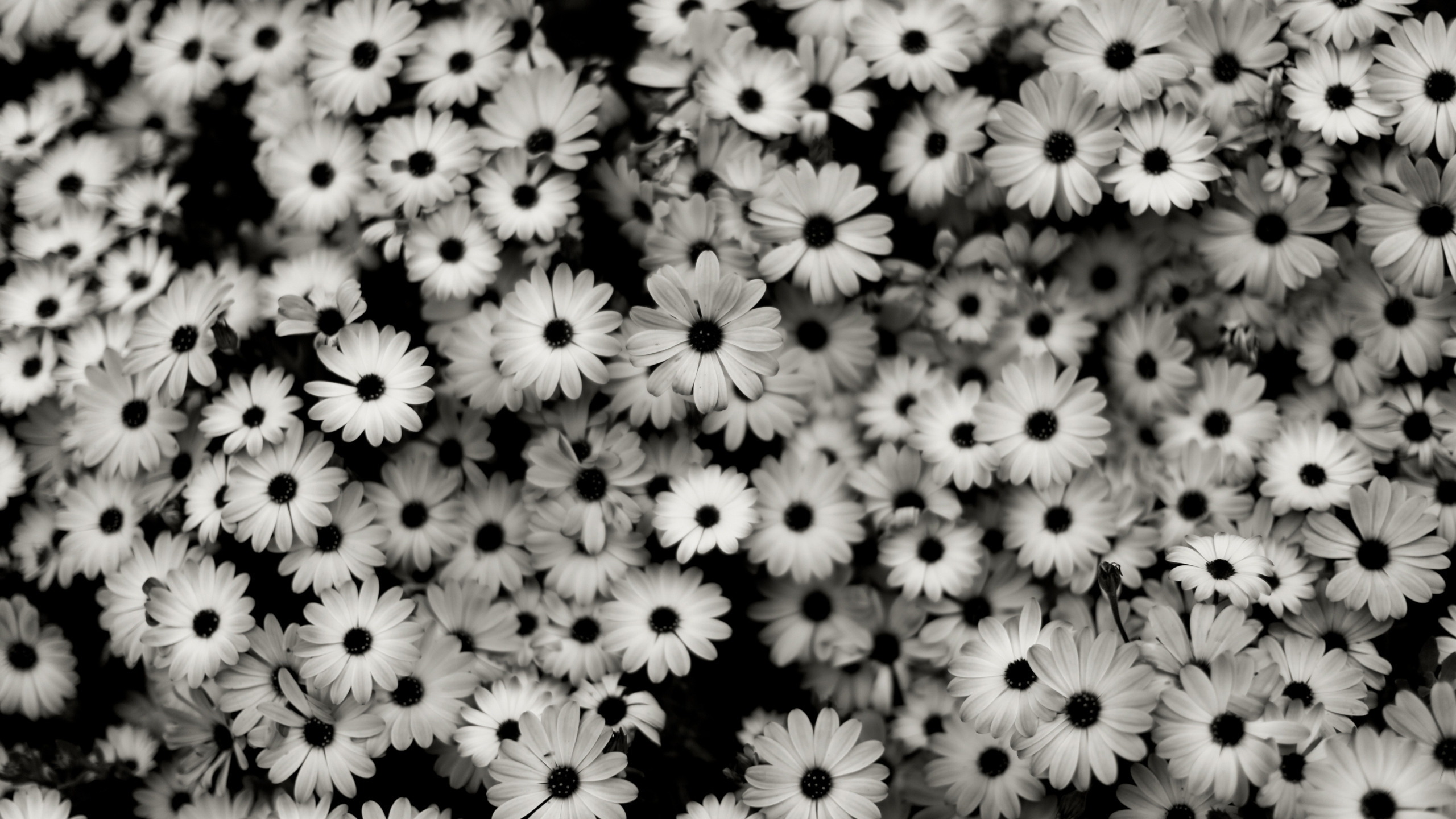 10 New Black And White Computer Backgrounds FULL HD 1080p For PC Background