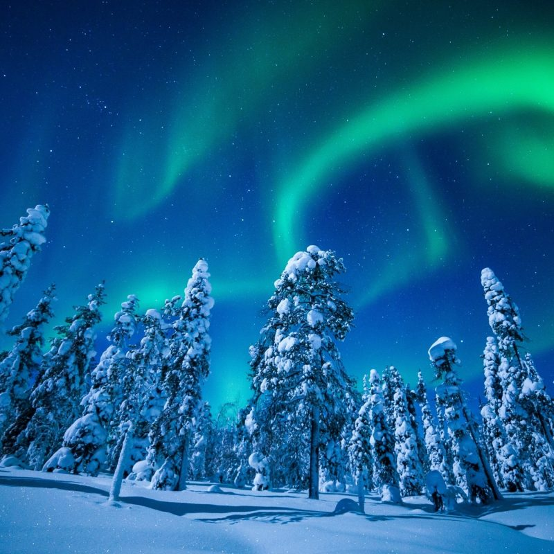 10 Latest Winter Northern Lights Wallpaper FULL HD 1080p For PC Desktop 2018 free download wallpaper forest winter frosted trees aurora borealis northern 800x800