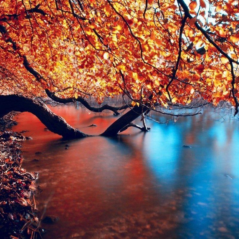 10 Most Popular Autumn Hd Wallpapers 1080P FULL HD 1080p For PC Desktop 2020 free download wallpaper hd autumn impremedia 800x800