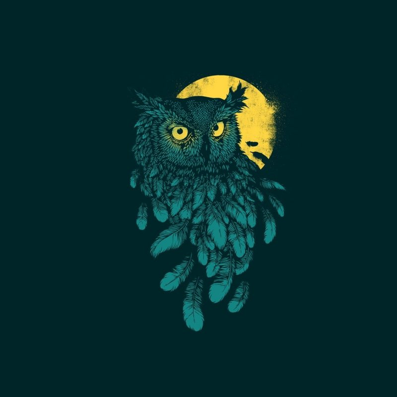 10 Top Owl Art Desktop Wallpaper FULL HD 1920×1080 For PC Desktop 2018 free download wallpaper illustration digital art animals simple background 800x800