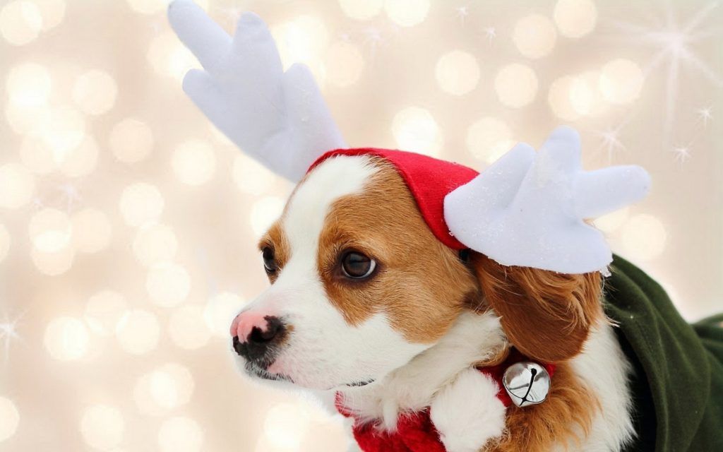 10 New Cute Animal Christmas Wallpaper FULL HD 1080p For PC Desktop 2020 free download wallpaper of a cute christmas dog trends wallpaper 1024x640