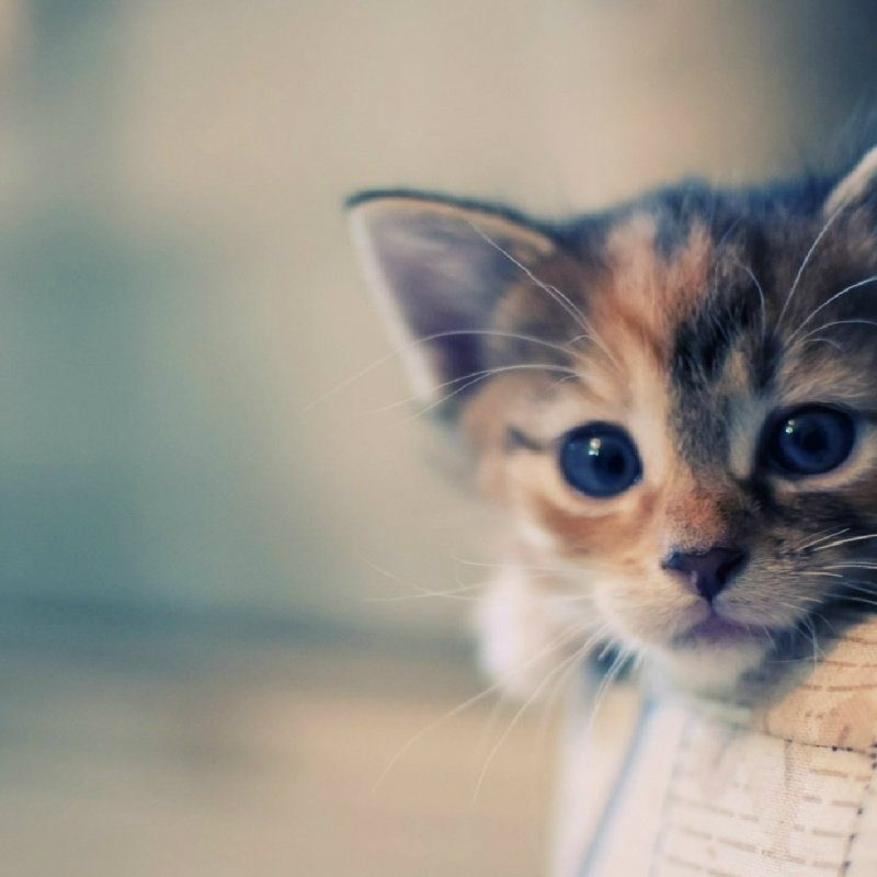 10 New Cat Backgrounds For Computer FULL HD 1080p For PC Desktop 2018 free download wallpaper of cute cats in hd backgrounds full pics for computer most 800x800