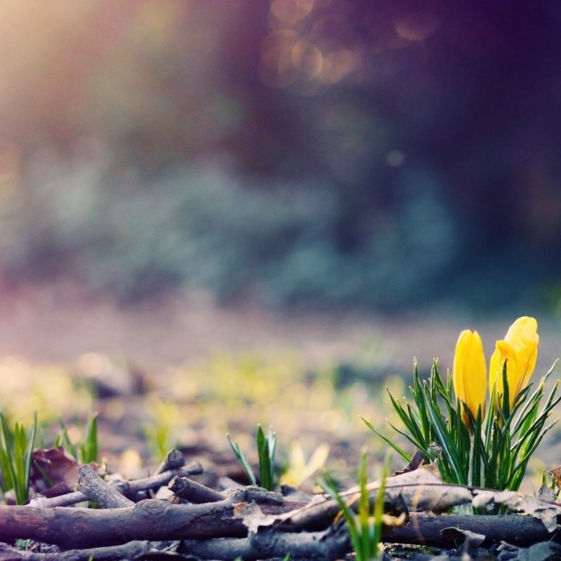 10 Latest Spring Hd Wallpapers 1080P FULL HD 1920×1080 For PC Background 2018 free download wallpaper of spring 58 images 800x800