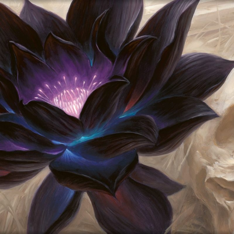 10 New Magic The Gathering Wallpaper 1920X1080 FULL HD 1920×1080 For PC Desktop 2020 free download wallpaper of the day black lotus magic the gathering 800x800