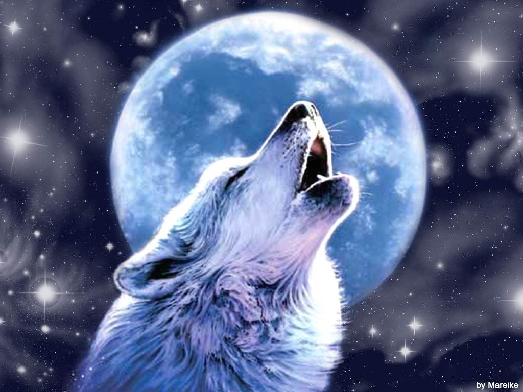 wallpaper of wolf 1024×768 cool wolf backgrounds | adorable