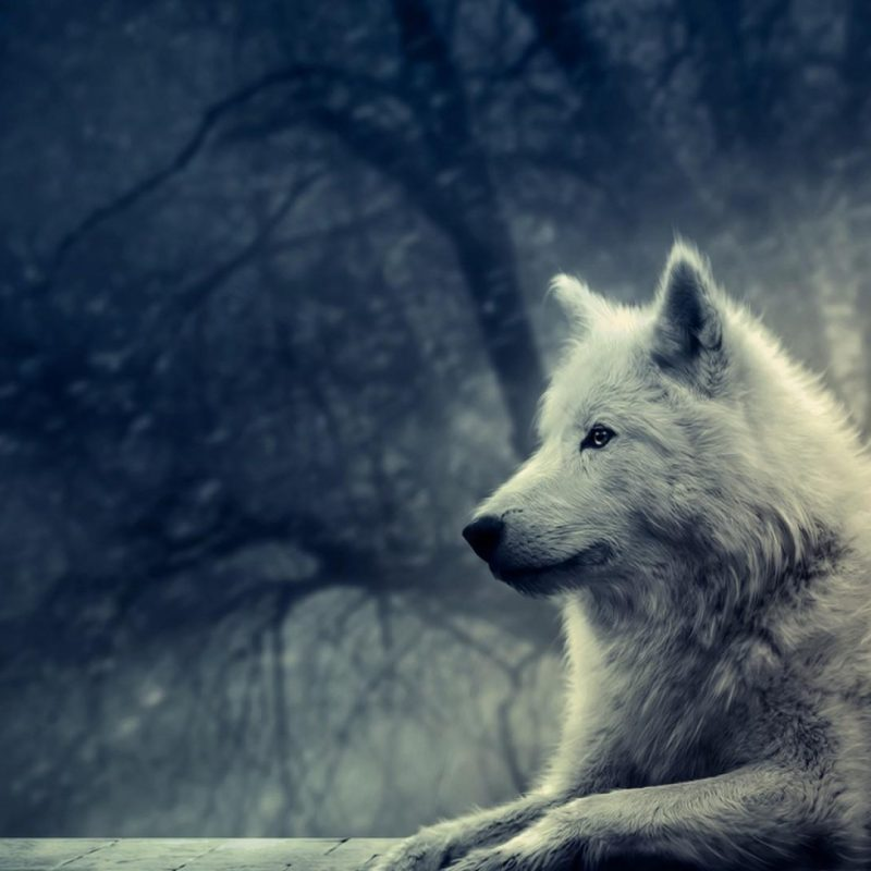10 new cool wolf desktop backgrounds full hd 1080p for pc background