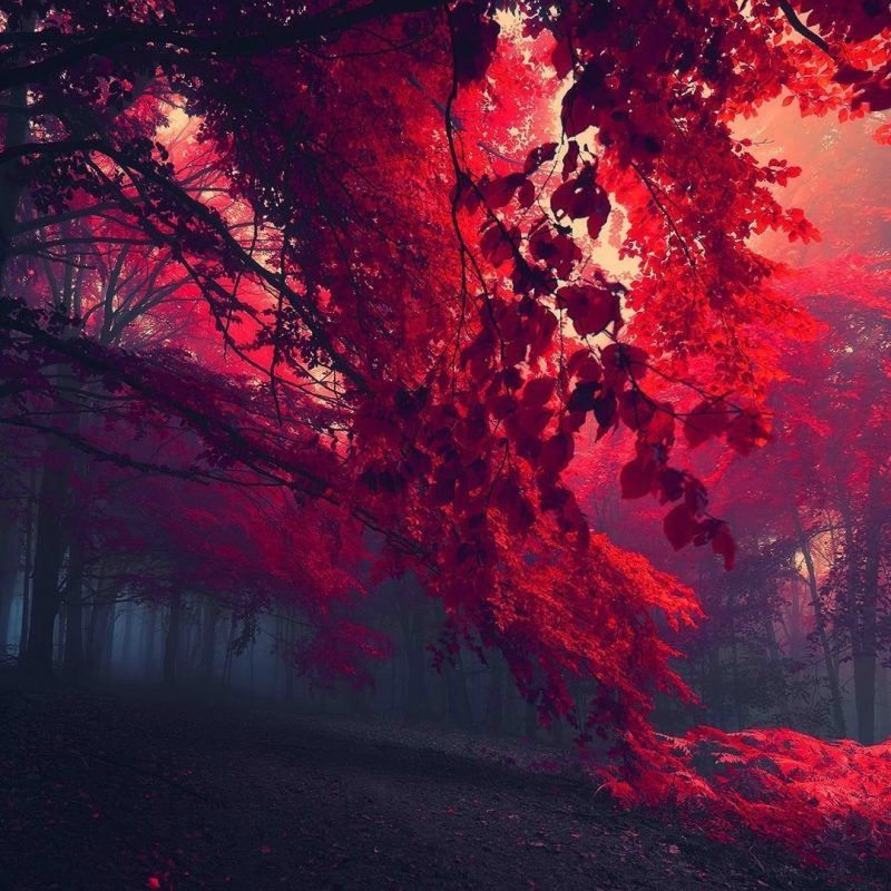 10 Best Red Fall Leaves Wallpaper FULL HD 1920×1080 For PC Desktop 2018 free download wallpaper sunlight trees forest fall leaves dark nature red 800x800