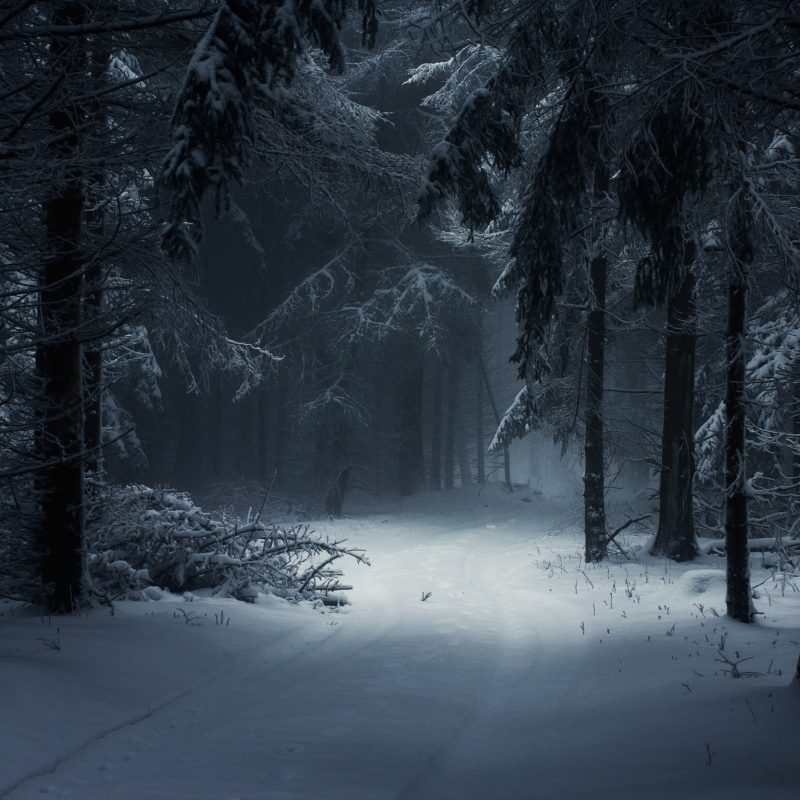 10 Latest Winter Forest Hd Wallpaper FULL HD 1080p For PC Desktop 2018 free download wallpaper sunlight trees landscape forest nature snow winter 800x800