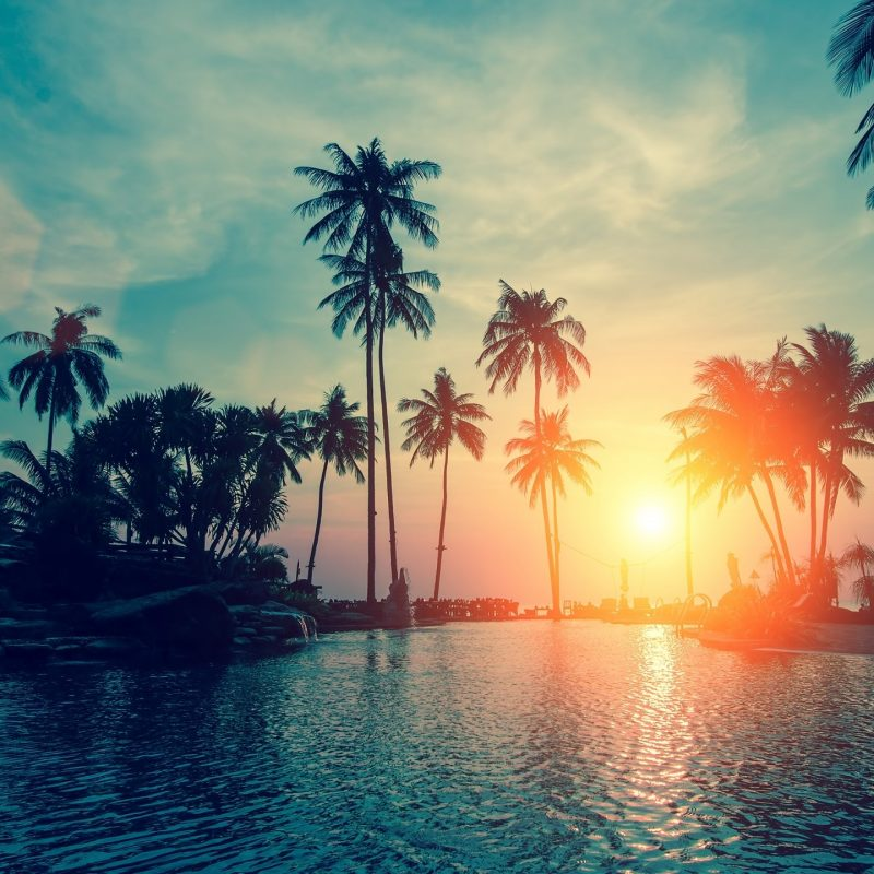 10 Best Palm Trees Wallpaper Hd FULL HD 1920×1080 For PC Background 2018 free download wallpaper sunset palm trees tropical beach hd nature 6500 1 800x800