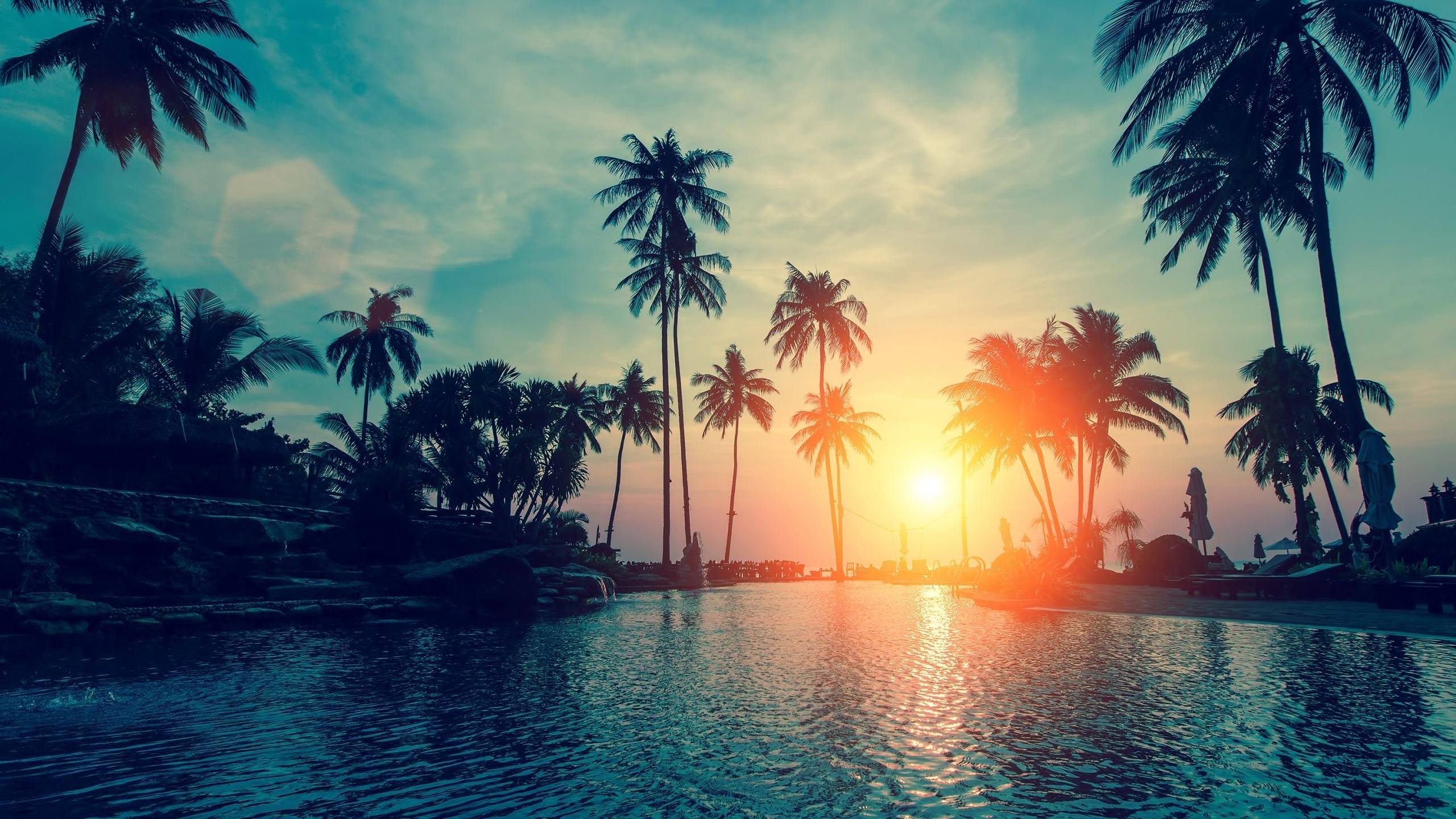 wallpaper sunset, palm trees, tropical beach, hd, nature, #6500