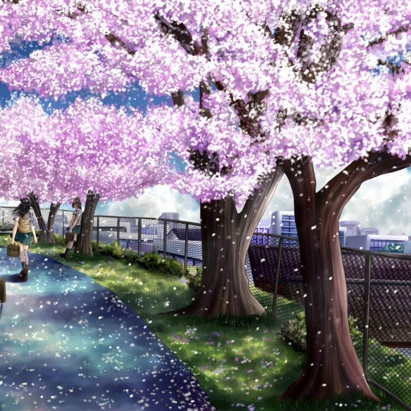 10 Most Popular Anime Cherry Blossom Wallpaper FULL HD 1080p For PC Background 2018 free download wallpaper wiki anime cherry blossom full hd wallpaper pic wpc0012431 800x800