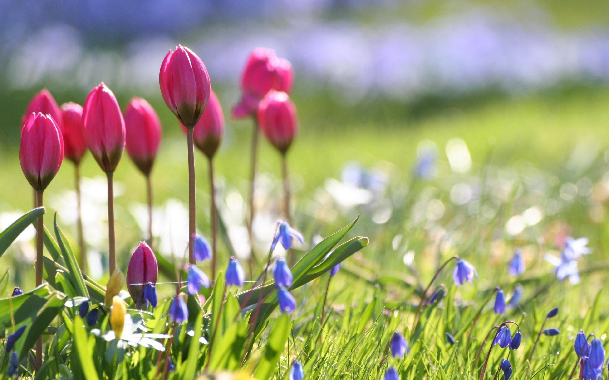 10 Most Popular Spring Flower Wallpaper Backgrounds Full Hd 1920