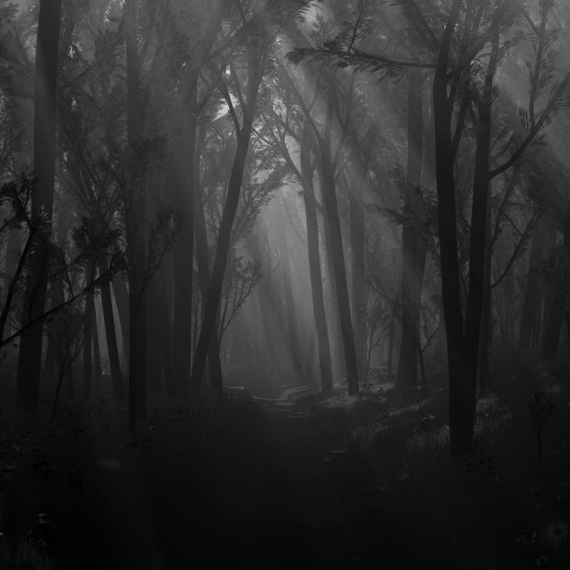 10 Best Black And White Forest Background FULL HD 1080p For PC Background 2018 free download wallpaper wiki black and white forest desktop background pic 800x800