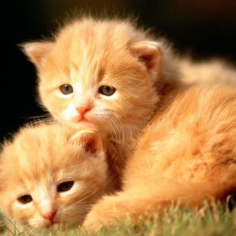 10 New Baby Animals Wallpaper Hd FULL HD 1920×1080 For PC Desktop 2018 free download wallpaper wiki cute baby animal wallpaper hd pic wpe0010789 800x800