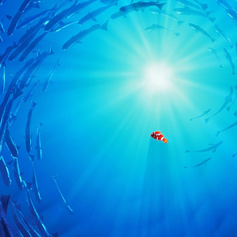 10 Latest Finding Nemo Ocean Background FULL HD 1920×1080 For PC Background 2018 free download wallpaper wiki finding nemo ocean background danaspeg top pic 800x800