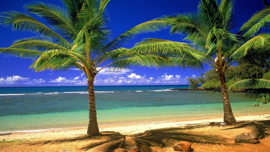 10 New Beach And Palm Trees Background FULL HD 1920×1080 For PC Background 2018 free download wallpaper wiki free desktop beach palm tree images pic wpd0013226 1024x576