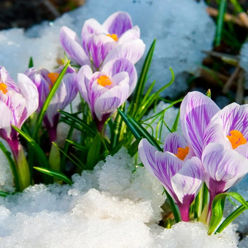 10 New Early Spring Desktop Background FULL HD 1920×1080 For PC Desktop 2018 free download wallpaper wiki spring flowers hd background pic wpb00465 wallpaper 2 800x800