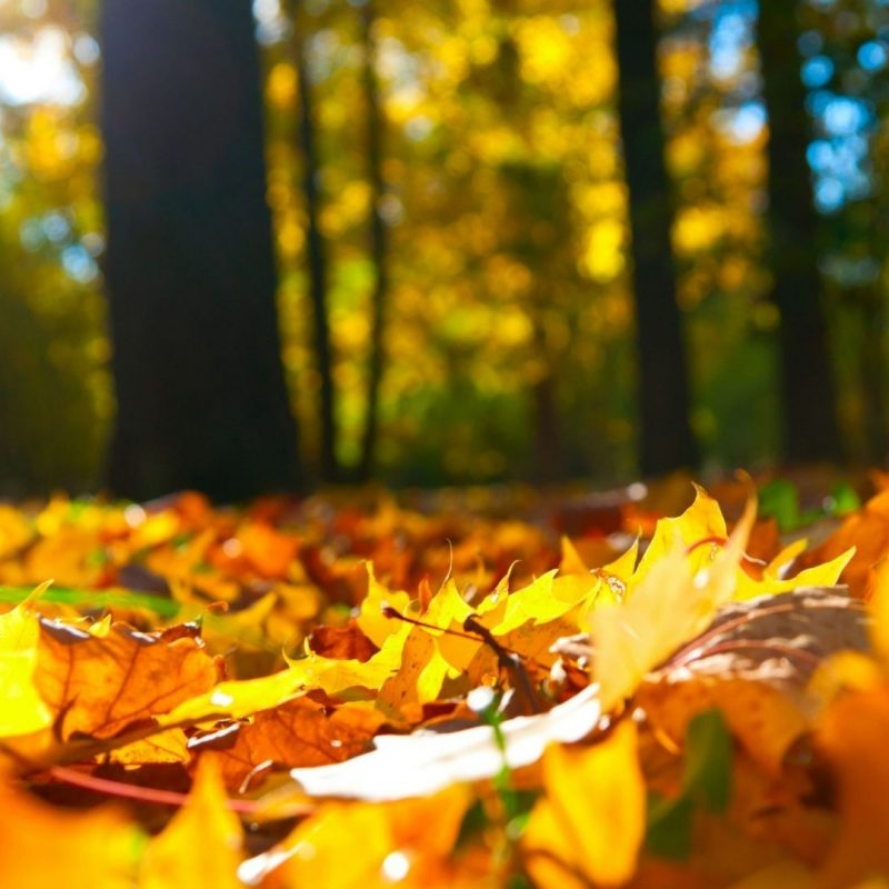 10 Most Popular Autumn Hd Wallpapers 1080P FULL HD 1080p For PC Desktop 2020 free download wallpapers album on imgur 1920x1080 wallpaper 1080p 43 wallpapers 800x800
