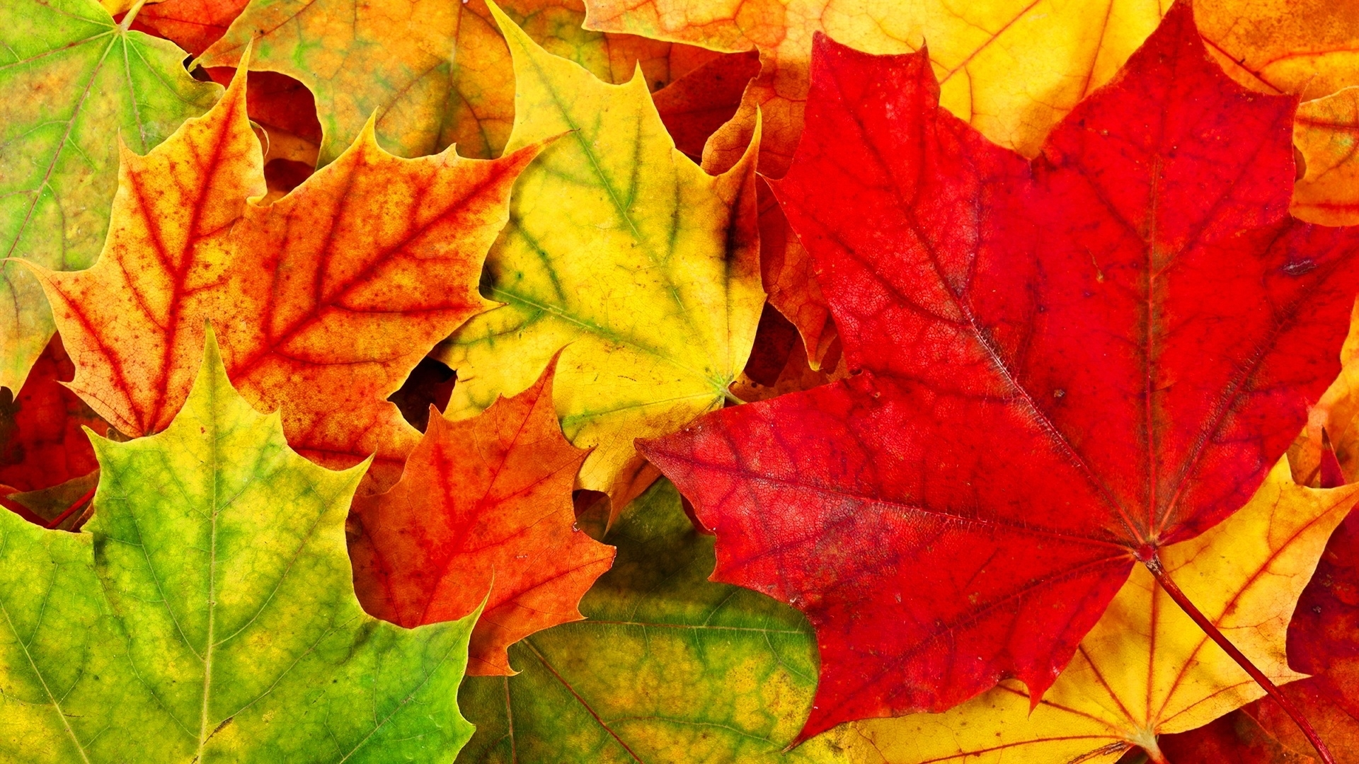 10 Top Autumn Leaves Wallpaper Widescreen FULL HD 1080p For PC Background