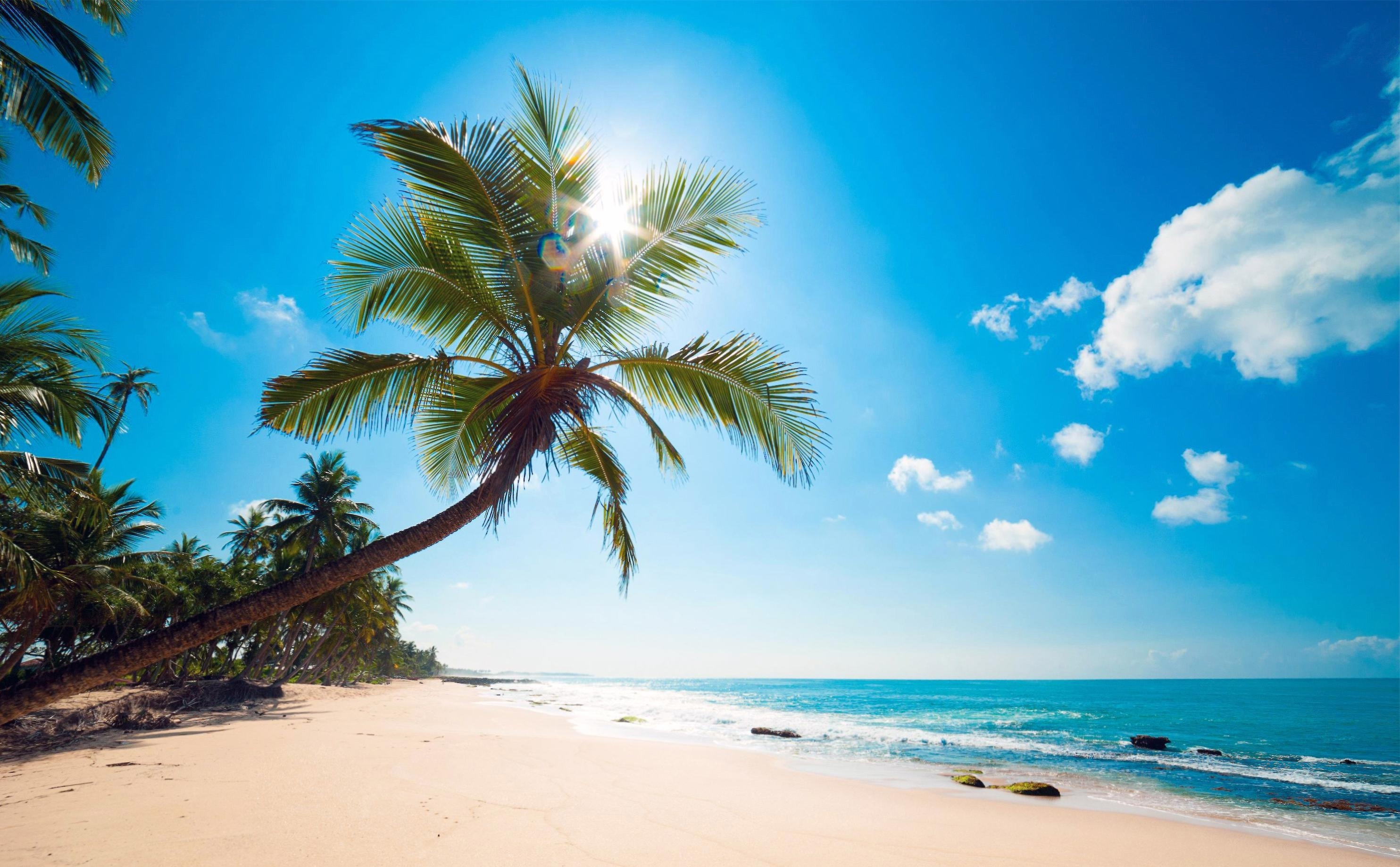 wallpaper's collection: «sunny beach wallpapers»