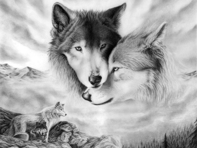 10 Top Cool Wallpapers Of Wolves FULL HD 1920×1080 For PC Desktop 2021 free download wallpapers of wolves wallpaper cave 800x600
