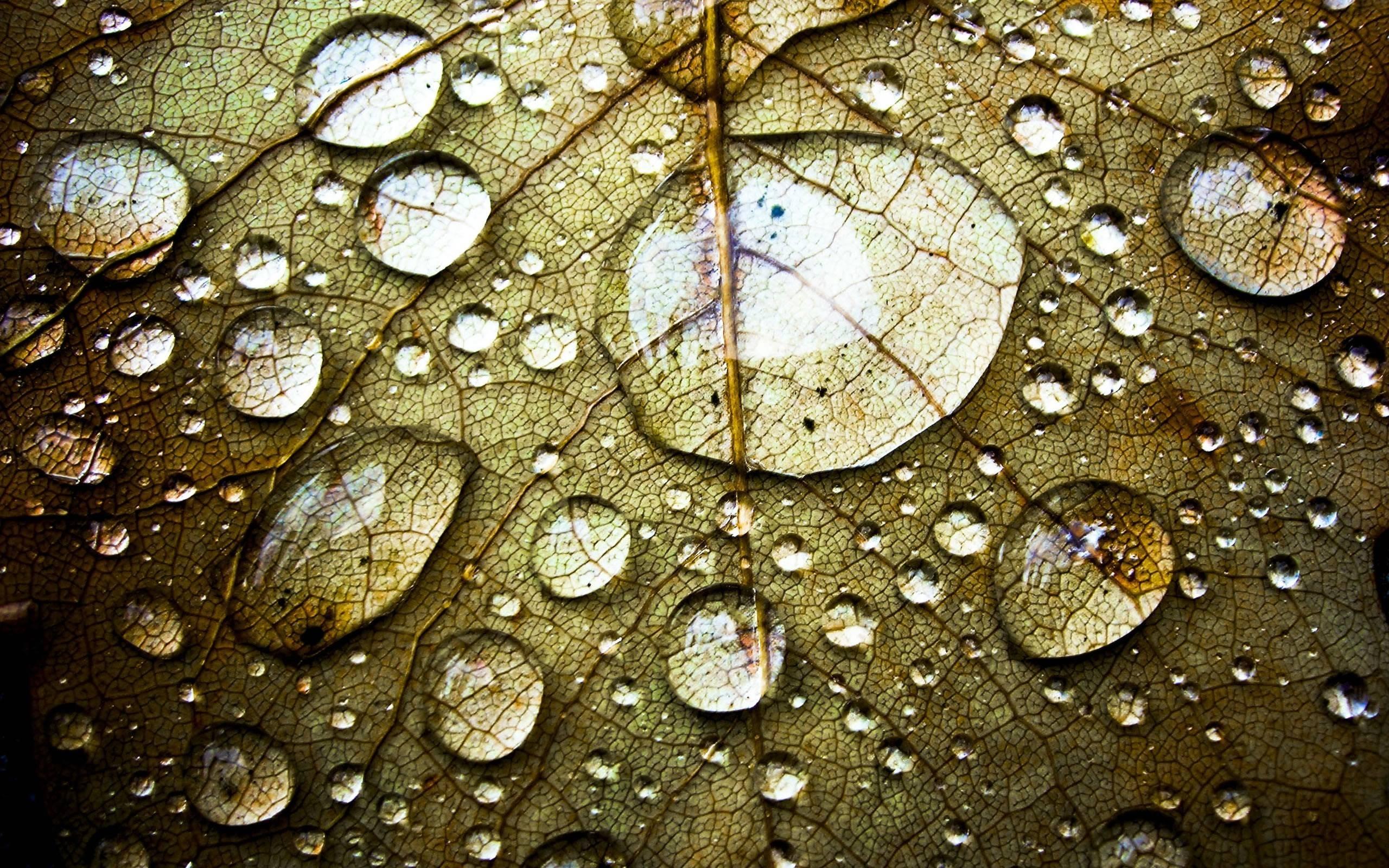 water drops on leaf 3d #wallpaper - hd wallpapers