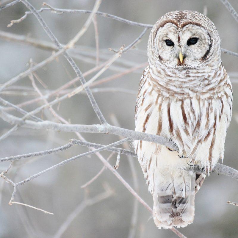 10 Top Owl Desktop Wallpaper Hd FULL HD 1920×1080 For PC Desktop 2018 free download white owl wallpapers hd wallpapers id 9046 800x800