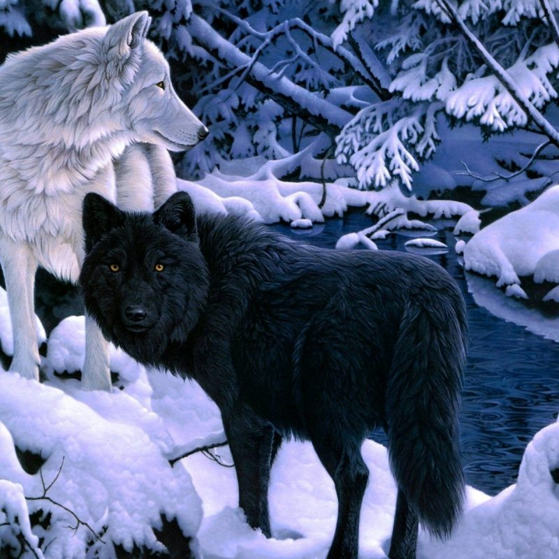 10 Most Popular Black And White Wolves Wallpaper FULL HD 1920×1080 For PC Background 2018 free download white wolf and black wolf wallpaper animals pinterest wolf 800x800