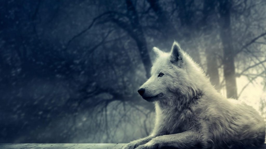 10 Top Cool Animal Wallpapers Wolf FULL HD 1920×1080 For PC Desktop 2018 free download white wolf pictures hd wallpaper of animals hdwallpaper2013 1024x576