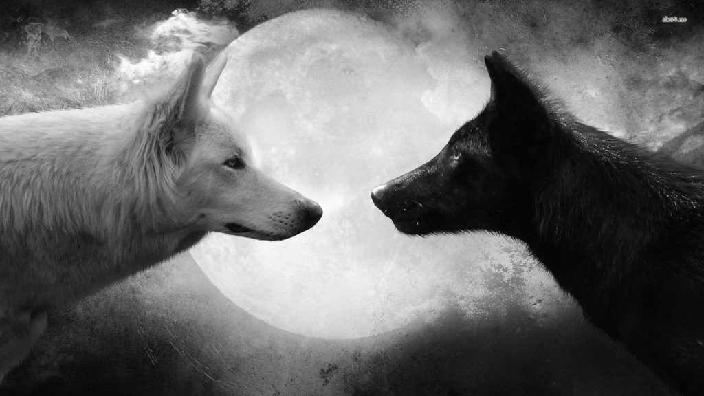 10 Most Popular Black And White Wolf Wallpaper FULL HD 1080p For PC Desktop 2018 free download white wolf wallpapers wallpaper cave 1024x576