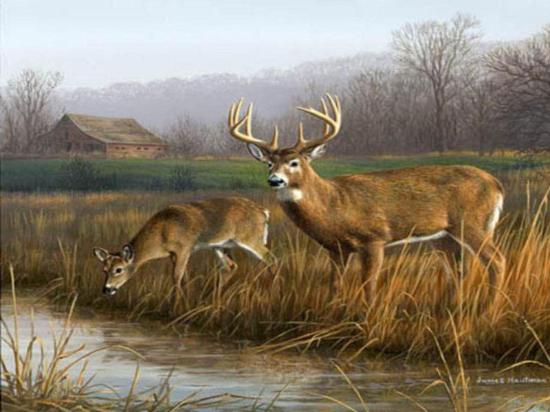 10 Best Whitetail Deer Desktop Background FULL HD 1920×1080 For PC Background 2018 free download whitetail deer backgrounds wallpaper cave 1 800x600