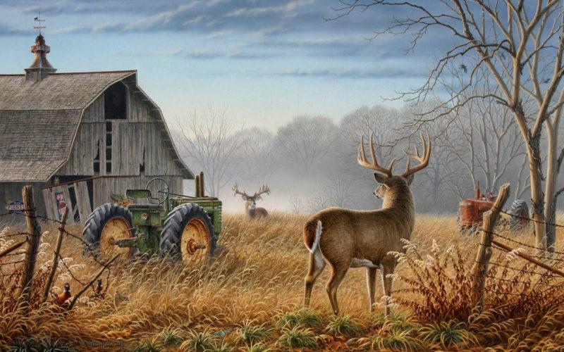 10 Best Whitetail Deer Desktop Background FULL HD 1920×1080 For PC Background 2018 free download whitetail deer backgrounds wallpaper cave 3 800x500