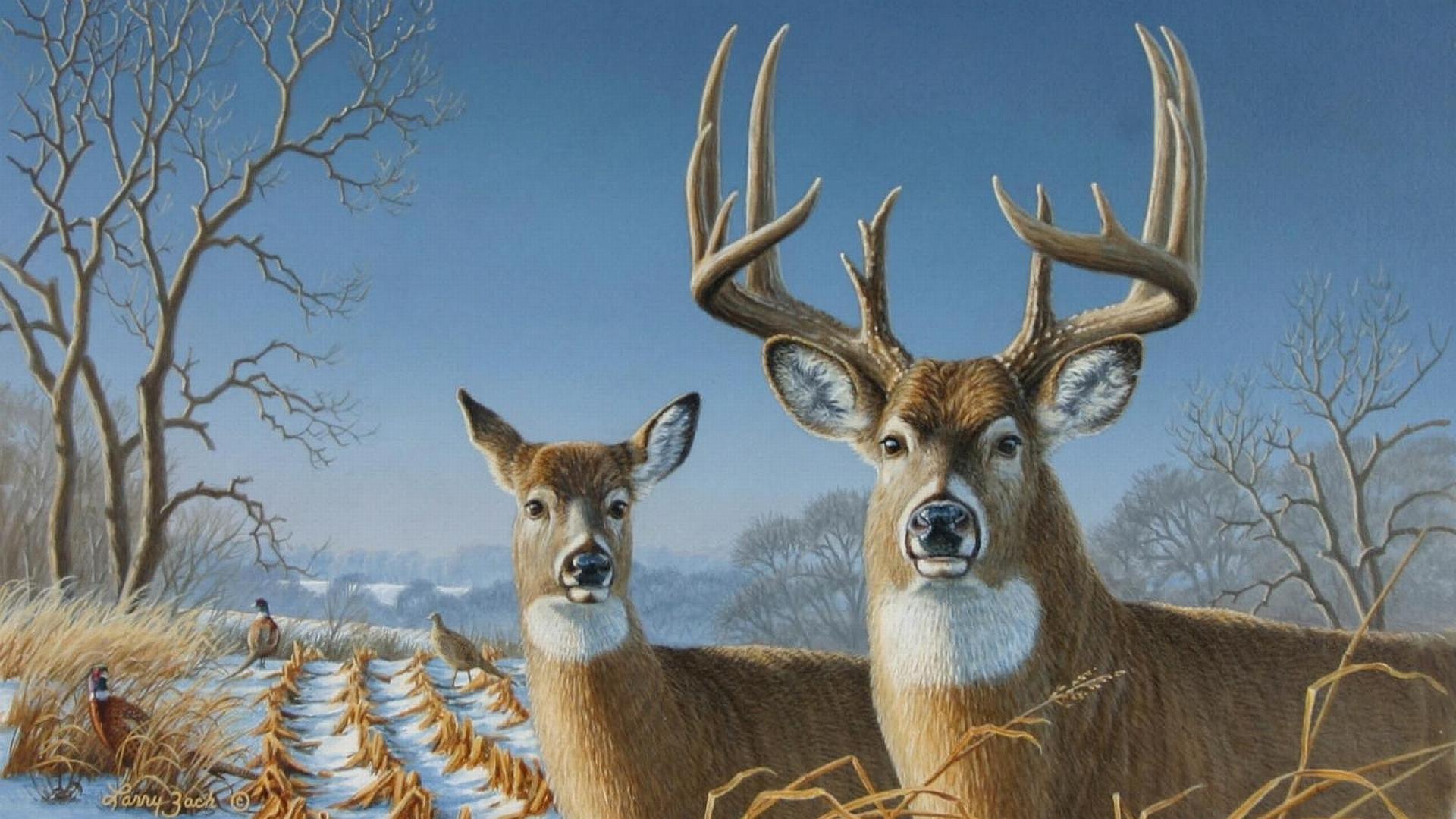 whitetail deers - wallpaper.wiki