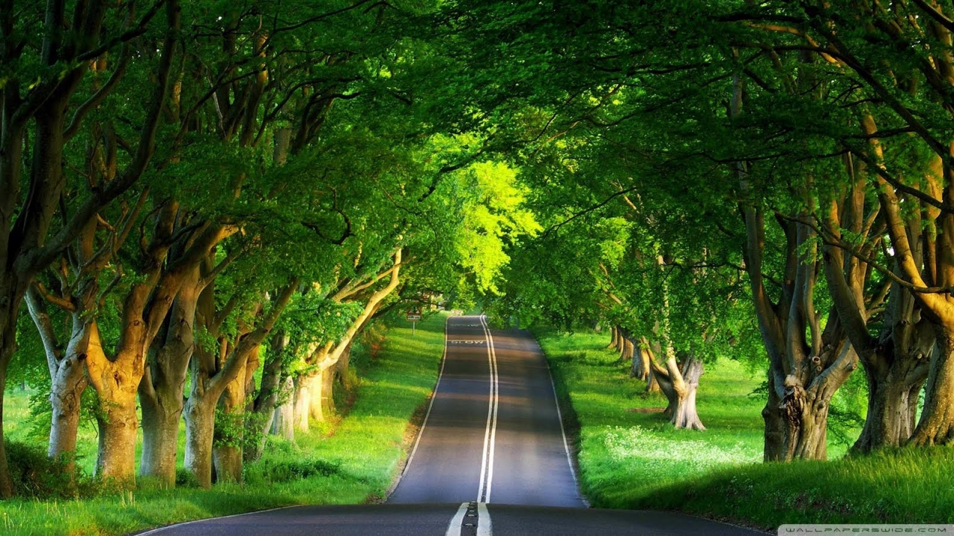 widescreen green nature hd pictures one with beautiful wallpaper