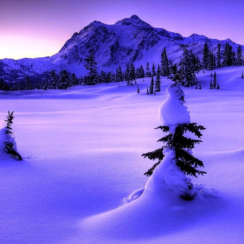 10 Best Winter Nature Wallpapers High Resolution FULL HD 1080p For PC Background 2018 free download widescreen high resolution afari with nature wallpaper quality for 800x800