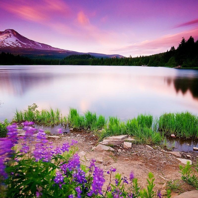 10 New Hd Widescreen Nature Backgrounds FULL HD 1080p For PC Background 2020 free download widescreen nature wallpapers high resolution gallery 66 plus pic 800x800