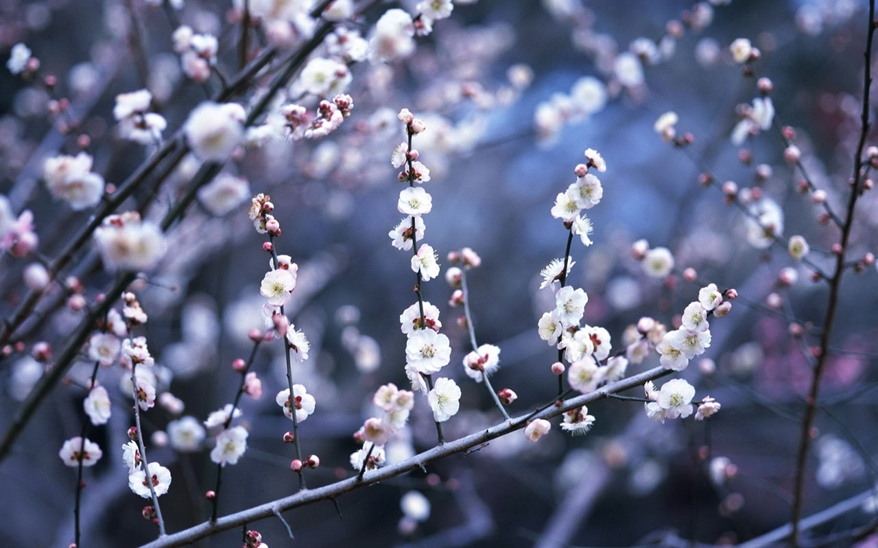 winter flower 25805 1280x800 px ~ hdwallsource