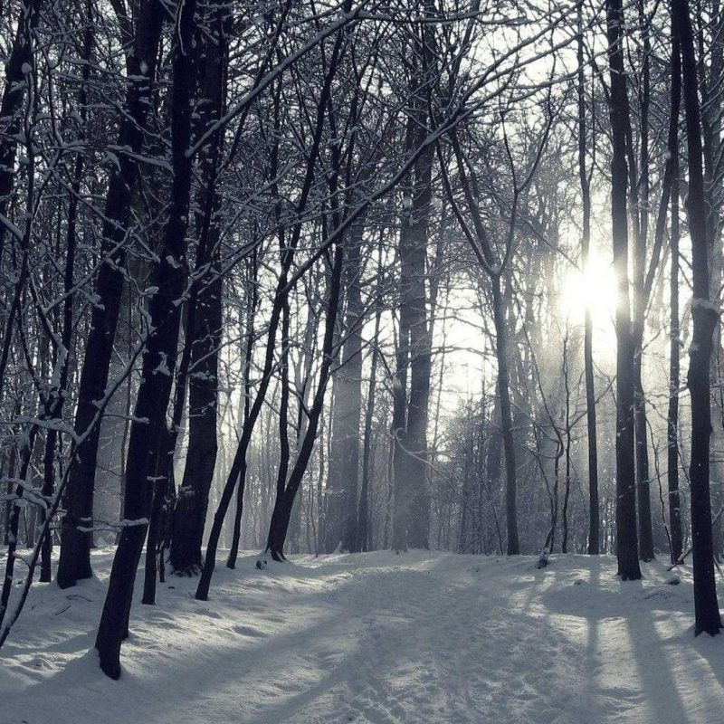 10 Best Winter Forest Wallpaper Hd FULL HD 1080p For PC Background 2018 free download winter forest wallpaper hd high quality snowy for androids wallvie 800x800