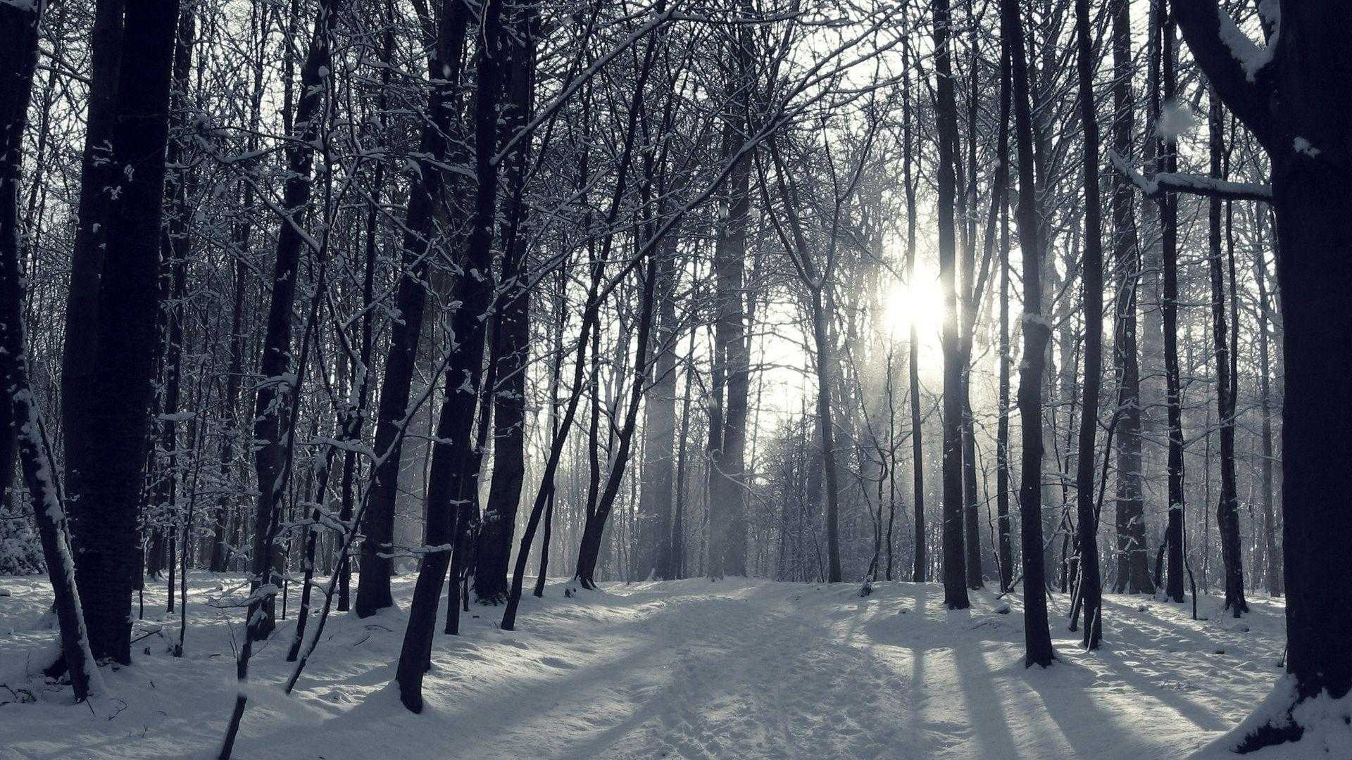 winter forest wallpaper hd high quality snowy for androids | wallvie