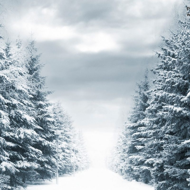 10 Best Winter Forest Wallpaper Hd FULL HD 1080p For PC Background 2018 free download winter forest wallpapers 44 winter forest hdq images wallpapers 800x800
